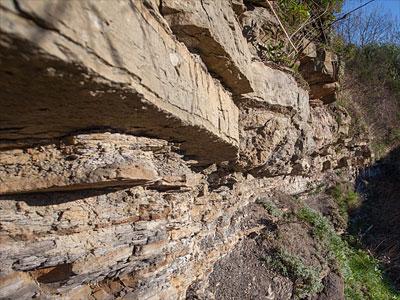 Craigleith Quarry - Local Geodiversity Site, Edinburgh