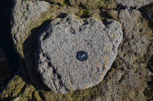 Sauropod footprint, Skye. Photo: Steve Brusatte